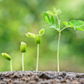 How to Nurture your Customers with DPS Seed